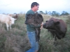 Lois watches Brian carry her baby calf