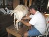 Jim Milks Fanny the Goat