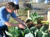 Joel tends box garden winter crop