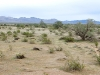 Niland Desert near Slab City