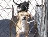 Perro de Mexico en Agua Prieta