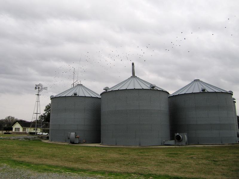 12. Rice grain storage, Abbeville, LA
