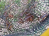 4. Live crawfish in trap, Abbeville Louisiana