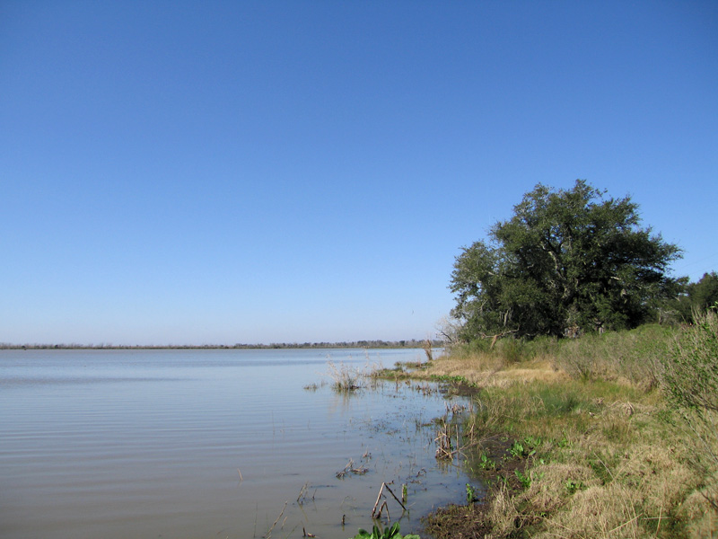 Acadiana wetlands, Louisiana