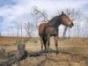 Luckenbach horse