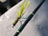 Frozen Fly Fishing Rod eyelets on Arkansas River at Hecla Junction