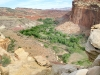 South Fruita Overlook from Cohab Canyon Trail