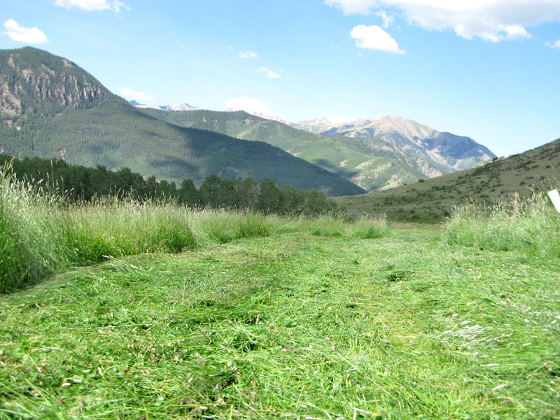 Vickers ranch fresh cut hay field in the Colorado Rockies