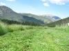 Vickers ranch fresh cut hay field in the Colorado Rockies