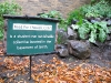 student collective garden on OSU Portland campus