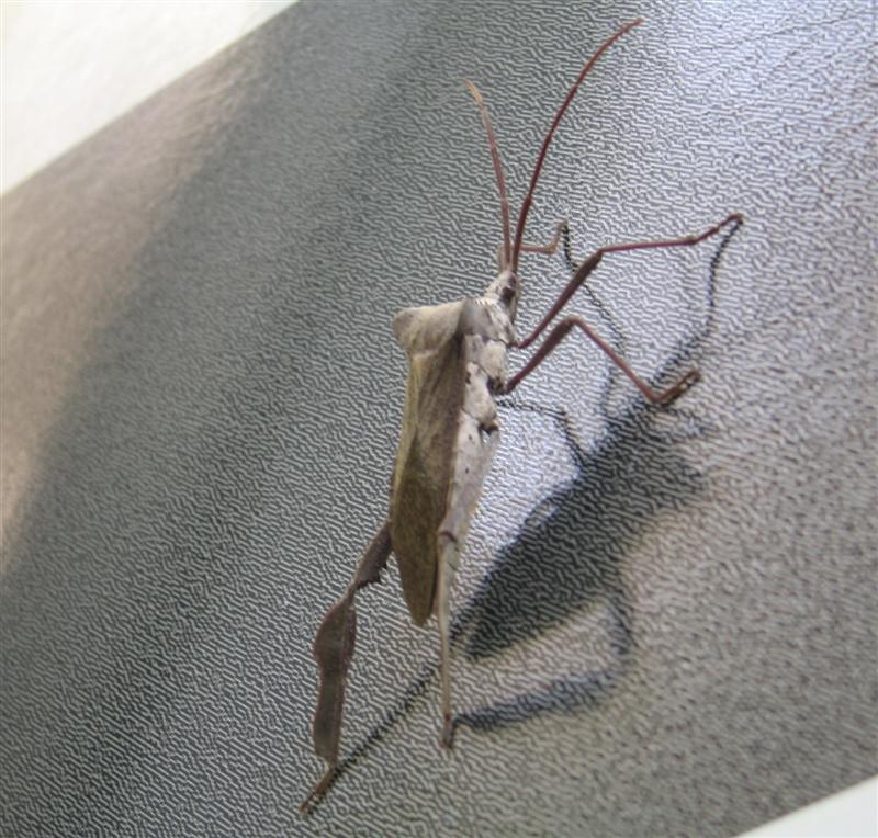 Skidaway Bug