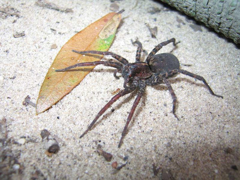 Florida State Park Tarantula