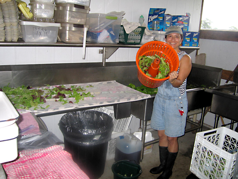 03. Washing Fresh Organic Lettuce Mix for Market