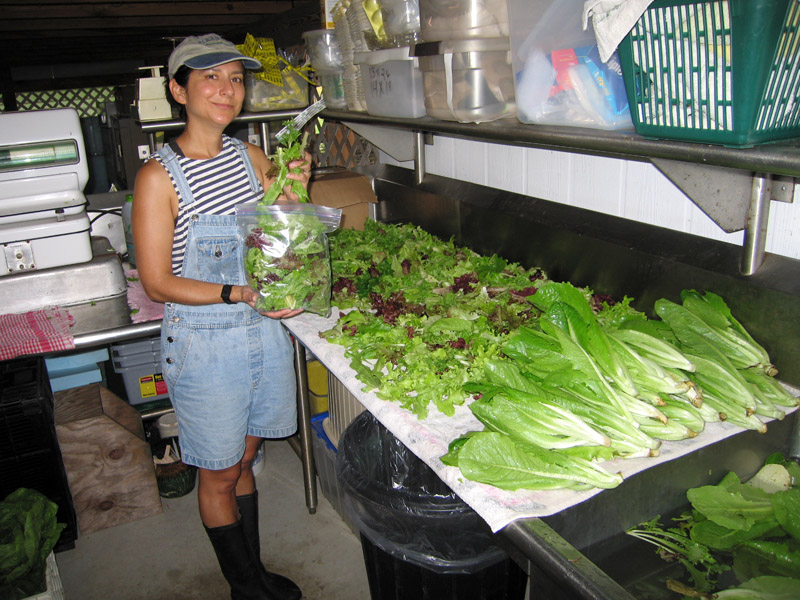 06. Preparing fresh organic lettuce mix and Romaine