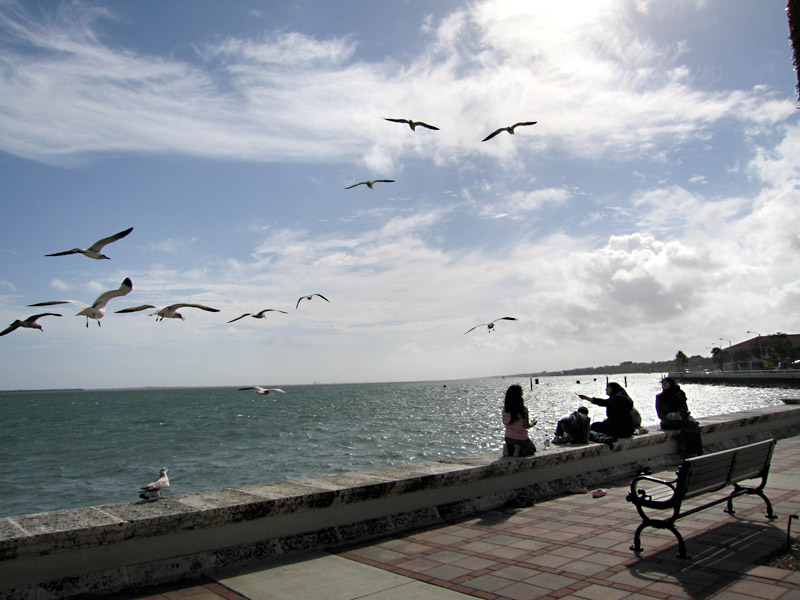 14. Gulls glide in the wind at the Fort Pierce Marina Market