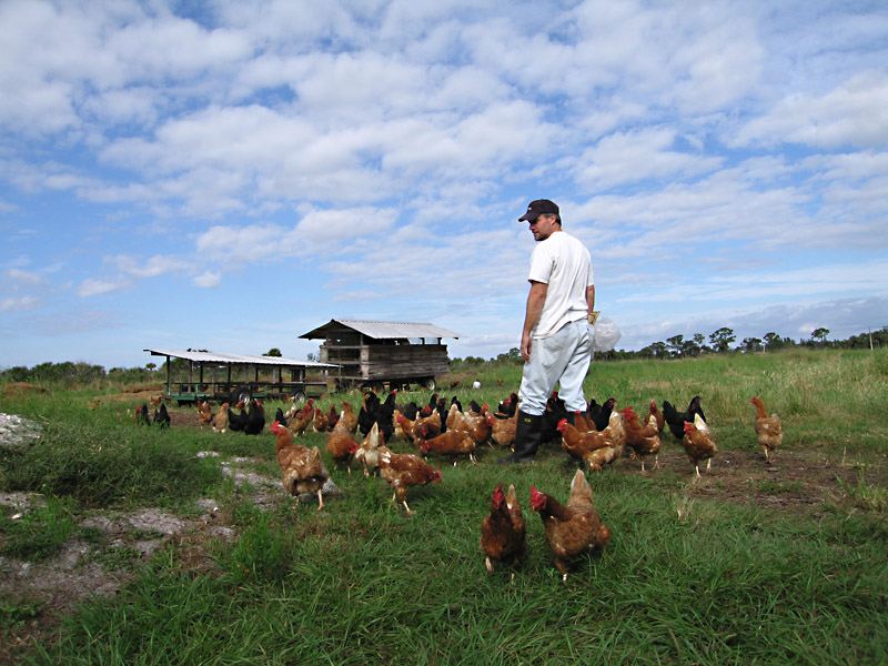 09. Jim tends to the Chickens