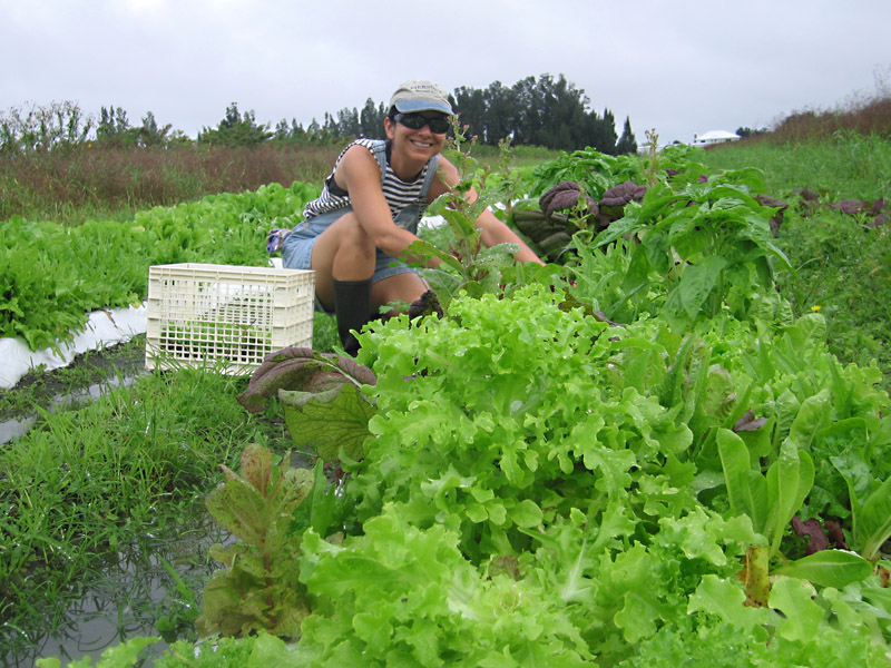 26. Rene picks lettuce at White Rabbit Acres.