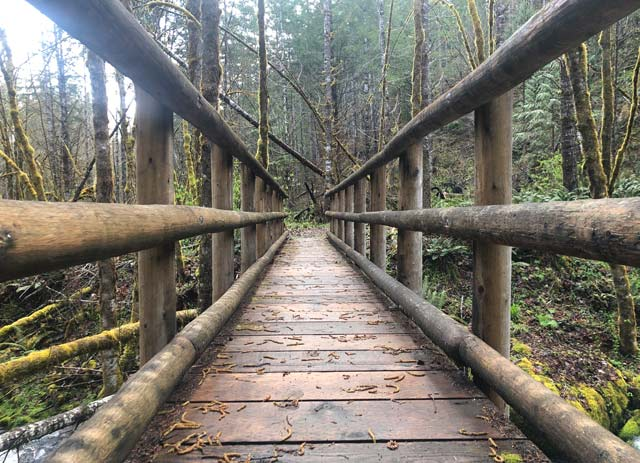 Willamette Forest Hiking Bridge