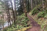 Forest Running Trail - Westfir, Oregon