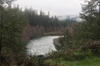 Willamette River Fork - Westfir, Oregon