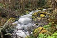 Forest Creek & Moss - Westfir, Oregon