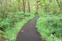 Buckhead Nature Trail Westfir Oregon