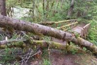 Westfir Oregon Forest Trail Bridge