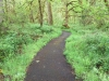 Buckhead Nature Trail Westfir Oregon