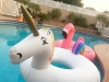 Whittier Pool Float Toys