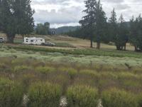 Purple Haze Lavender Farm, Sequim WA