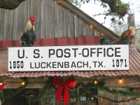 Resident Roosters at Luckenbach Texas