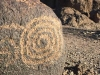 Petroglyphs at Painted Rock Campground Gila Bend, AZ
