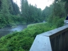 Fish Creek Bear Viewing at Hyder, Alaska