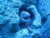 San Francisco Academy of Sciences Steinhart Aquarium Snowflake Eel