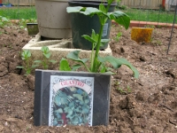 seed packet cd cover plant row tag