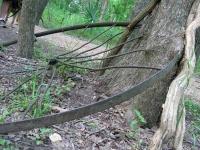 Palmetto State Park Trail