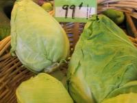 Conehead Cabbage?