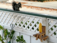 corn cob picnic table wood squirrel feeder craft project