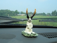Our Dashboard Jackalope from Wall Drug