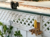 corn cob picnic table wood squirrel feeder craft project