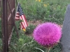 Luckenbach, Texas Town Cemetery Thistle Flower