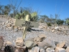 Boothill Cemetery Tombstone Arizona