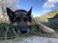 Wyatt at Great Basin National Park