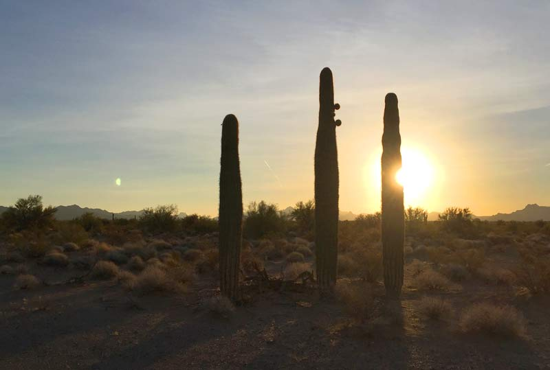 Arizona Cactus Sunrise