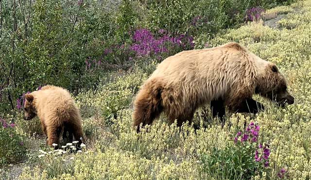 Yukon Grizzlies