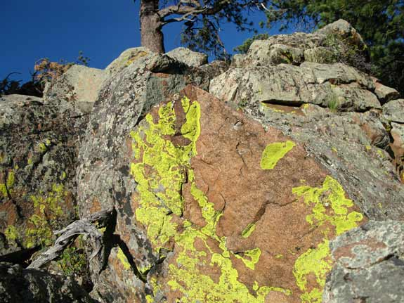 Crystal Lakes Lichens at Jerry's Acres