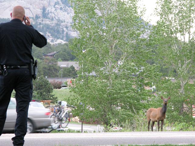 Cops Estes Park, CO