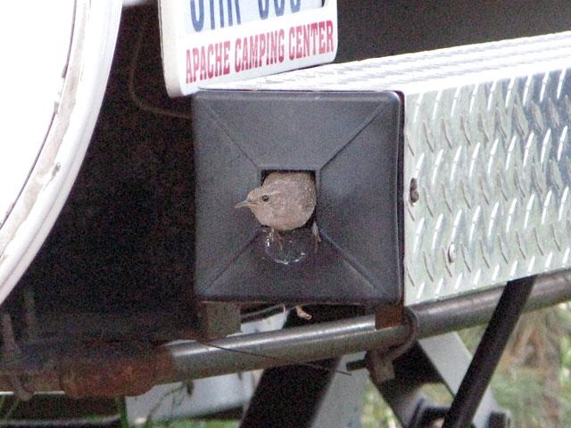 Snowbird RV Bumper Summer Residents