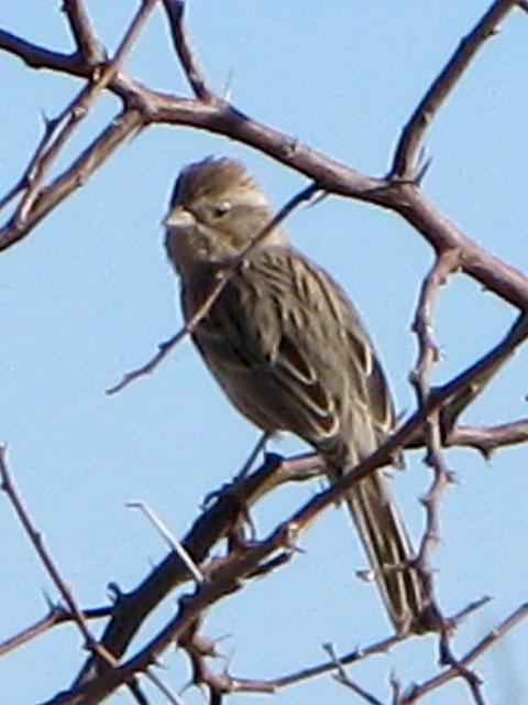 Elfrida Arizona Wild Bird