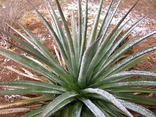 Elfrida Arizona Desert Snow